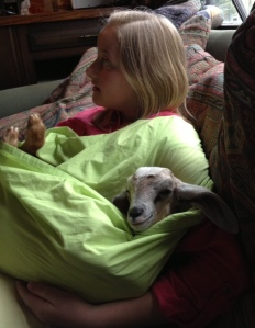 Attachment Goat Parenting