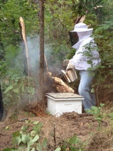 Hal calming the bees with smoke