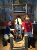 Chet and Jill's son Dawsy milking Miss B at Ashley's
